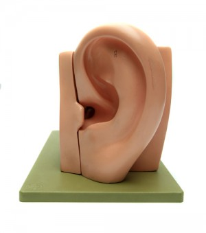 ear_thumb